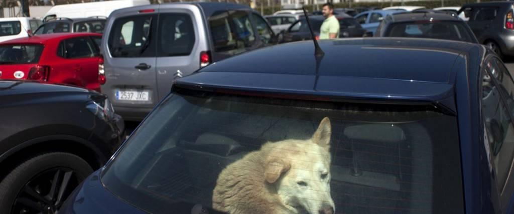 Chien enfermé dans une voiture en plein soleil